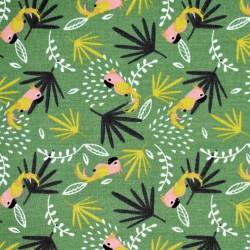 Cotone parrots