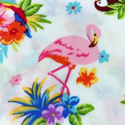 Cosmo - Parrots