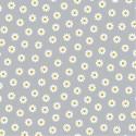 Cotton daisy
